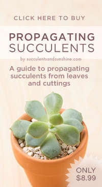 Propagating-Succulents-the-eBook-Tall-Affiliate-Banner